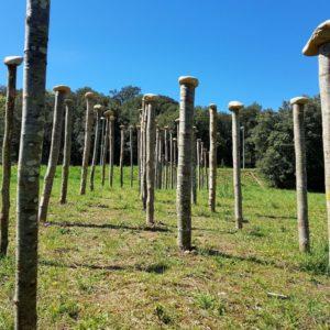 Aniol Olmedo - Menhirs de fusta
