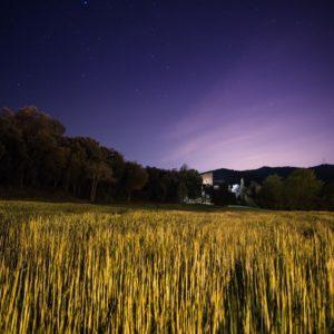 Martí Navarro - Primavera estelada